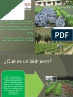 Produccion de Hortalizas en Biohuertos