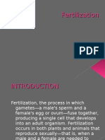 Fertilization 2