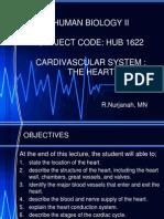 The Heart - Cardiovascular System