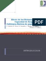 Efecto de los bioinsumos en la capacidad de respuesta de cultivares nativos de papa a sequía