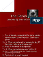 The Pelvis