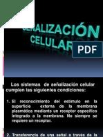 Temas 5 Principios de  Señalización  celular