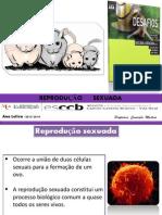 PPT 12 - Reprodução sexuada