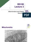 Mitochondria and Chloroplast