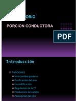 sistemarespiratorioporcionconductora-101016004414-phpapp01.ppt
