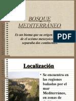 presentacion bosque mediterraneo.