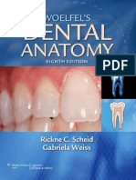 Woelfels Dental Anatomy - Its Relev. to Dentistry 8th Ed. - R. Scheid, G. Weiss
