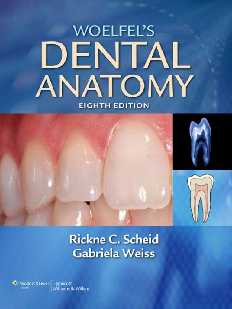 Woelfels Dental Anatomy - Its Relev. to Dentistry 8th Ed. - R ...