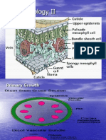 Plant Histology 2