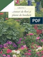 Straturi de Flori Si Plante de Bordura