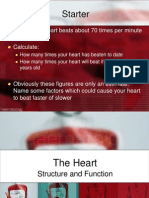 heartstructure and function
