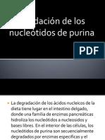 Degradación de los nucleótidos de purina