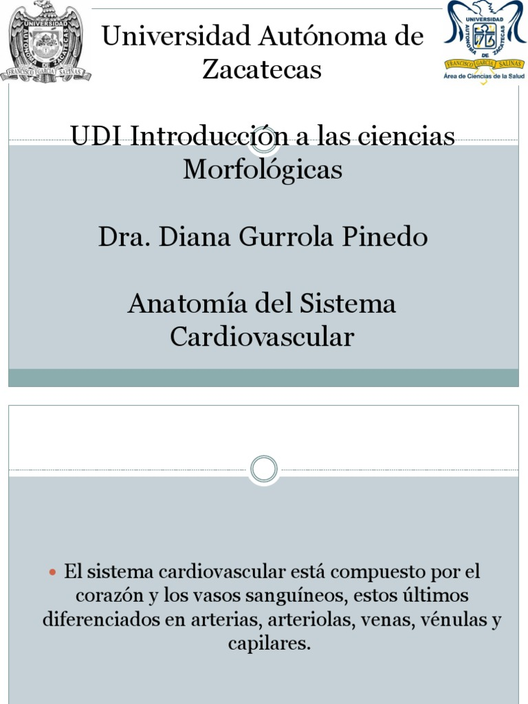 Anatomia Del Sistema Cardiovascular