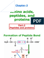 Peptides and Proteins for Web