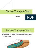 6. Electron Transport Chain PPT 5