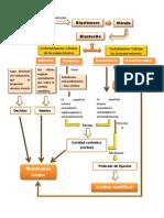 Mapa Placenta