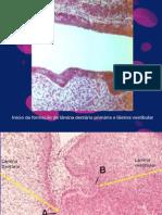 Odontogense Slide[1]