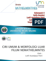 Filum Nemathelminthes