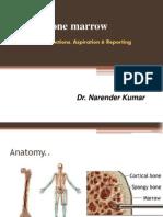 Bone Marrow Class