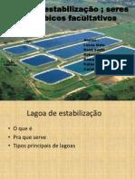 Lagoa de estabilização e seres anaeróbicos facultativos final