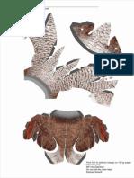 Female Bird of Paradise Sheet 1