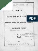 Saving the Wild Plum Crop