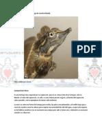 Ficha Apalone Spinifera