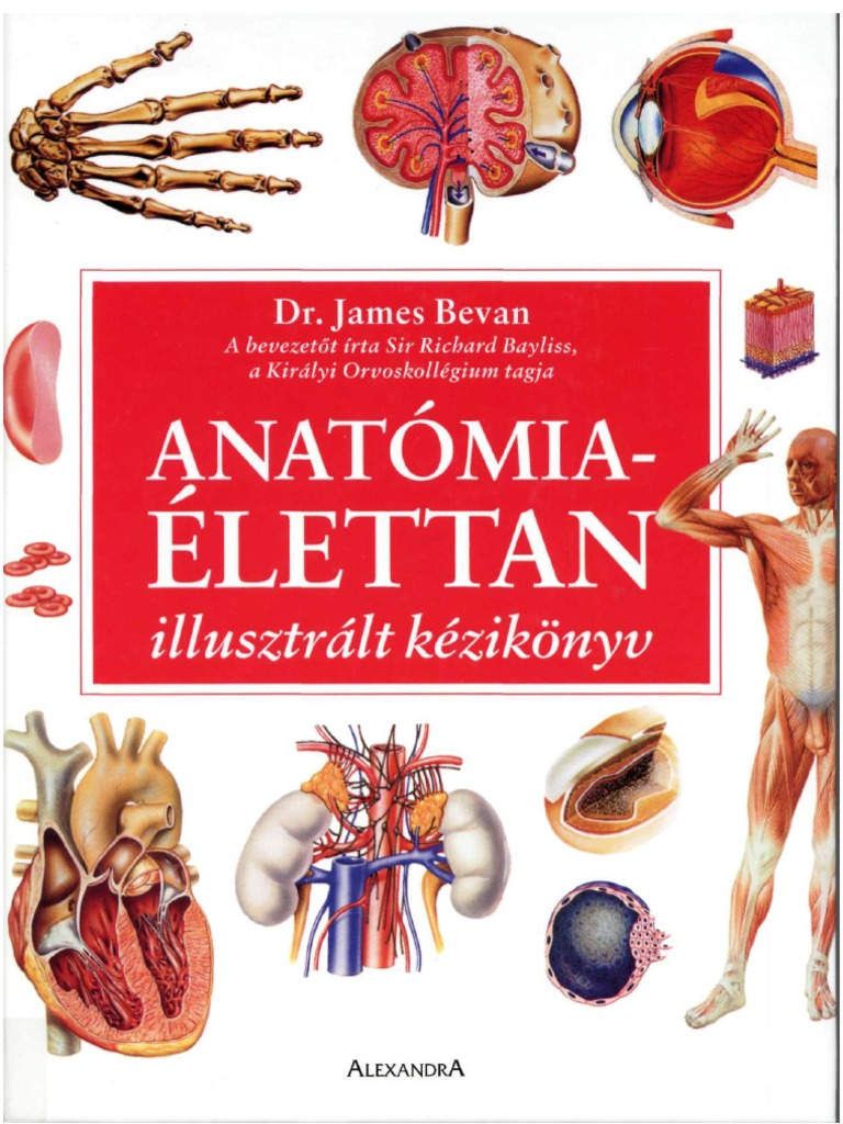 55112277 53 Anatomia Elettan Kezikonyv 4d3d49816b