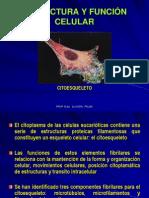07_Presentación  Citoesqueleto _Cel2º2010