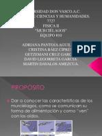 EXP_01_E10_4020_MURCIÉLAGOS.pptx