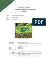 Morfologi Alpinia galanga