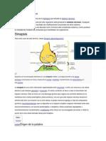 QUE ES LA NEUROFISIOLOGIA.docx