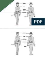 kelenjar endokrin F4