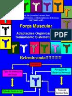 aula.força muscular