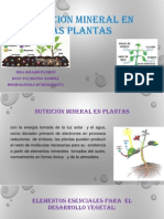 seminario III - NUTRICION MINERAL EN LAS PLANTAS.pptx