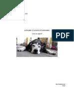 lathund för rapportskrivning