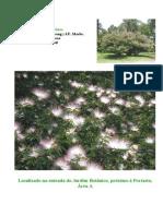 arvores floridas primavera JBSP.pdf