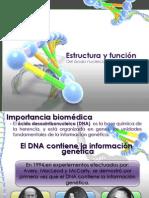 Estructura y función del ácido nucleico