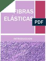 Fibras Elasticas