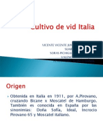 Cultivo de Vid Italia