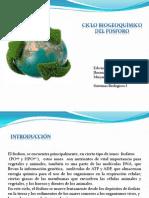 Presentacion Ciclo de Fosforo