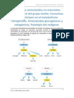 Biosíntesis de aminoácidos.docx