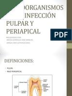 MICROORGANISMOS EN LA INFECCIÓN PULPAR Y PERIAPICAL