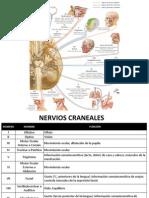 Sistema Nervioso Periférico alumnos