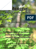 Malunggay Makes a Golden Comeback - EditedA