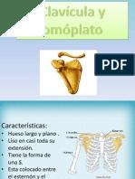 La Clavicula y El Omoplatoexpo (1)