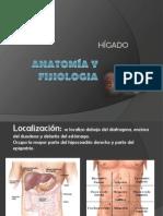 Anatomía y Fisiología del Hígado
