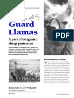 Guard Llama With Sheep
