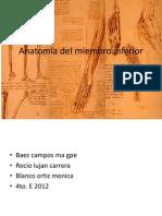 Anatomia Del Miembro Inferior Plus