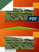 Presentación aguacate JMP